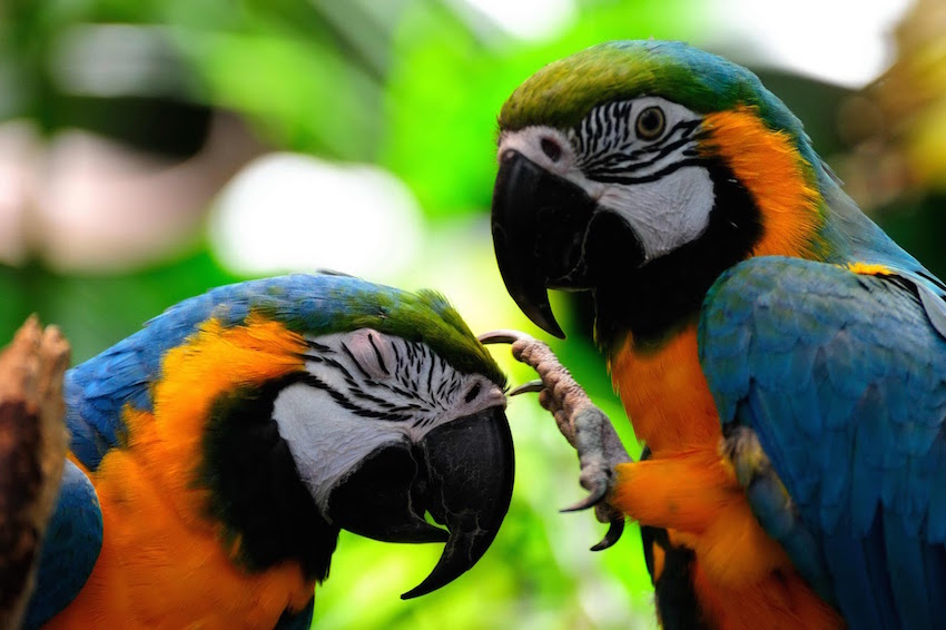 The Amazon has more species of birds than any place on Earth.